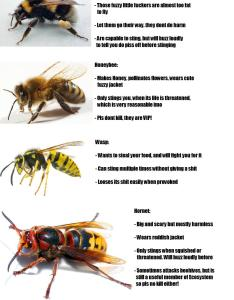 Useful guide to differentiate between wasps bees also hornets coolguides rh reddit