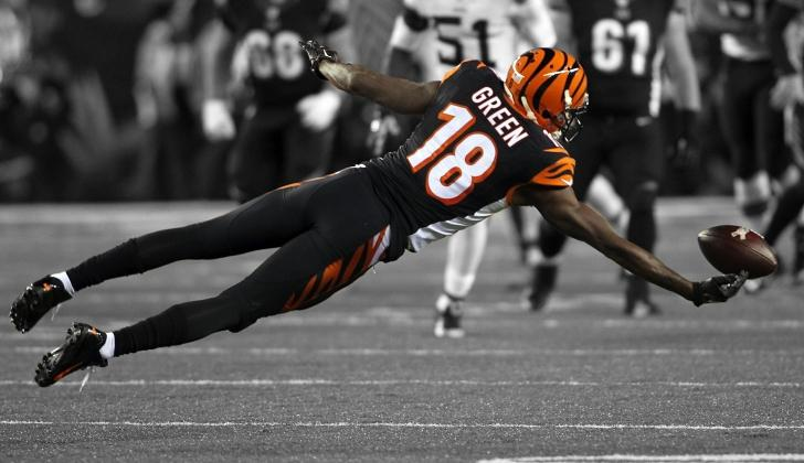 new banner suggestion bengals
