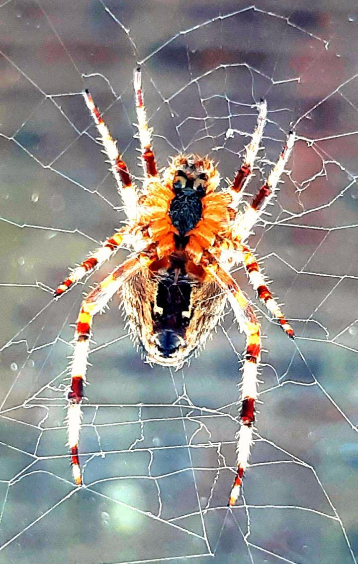 Spider phone Wallpaper Size [1299×2048]