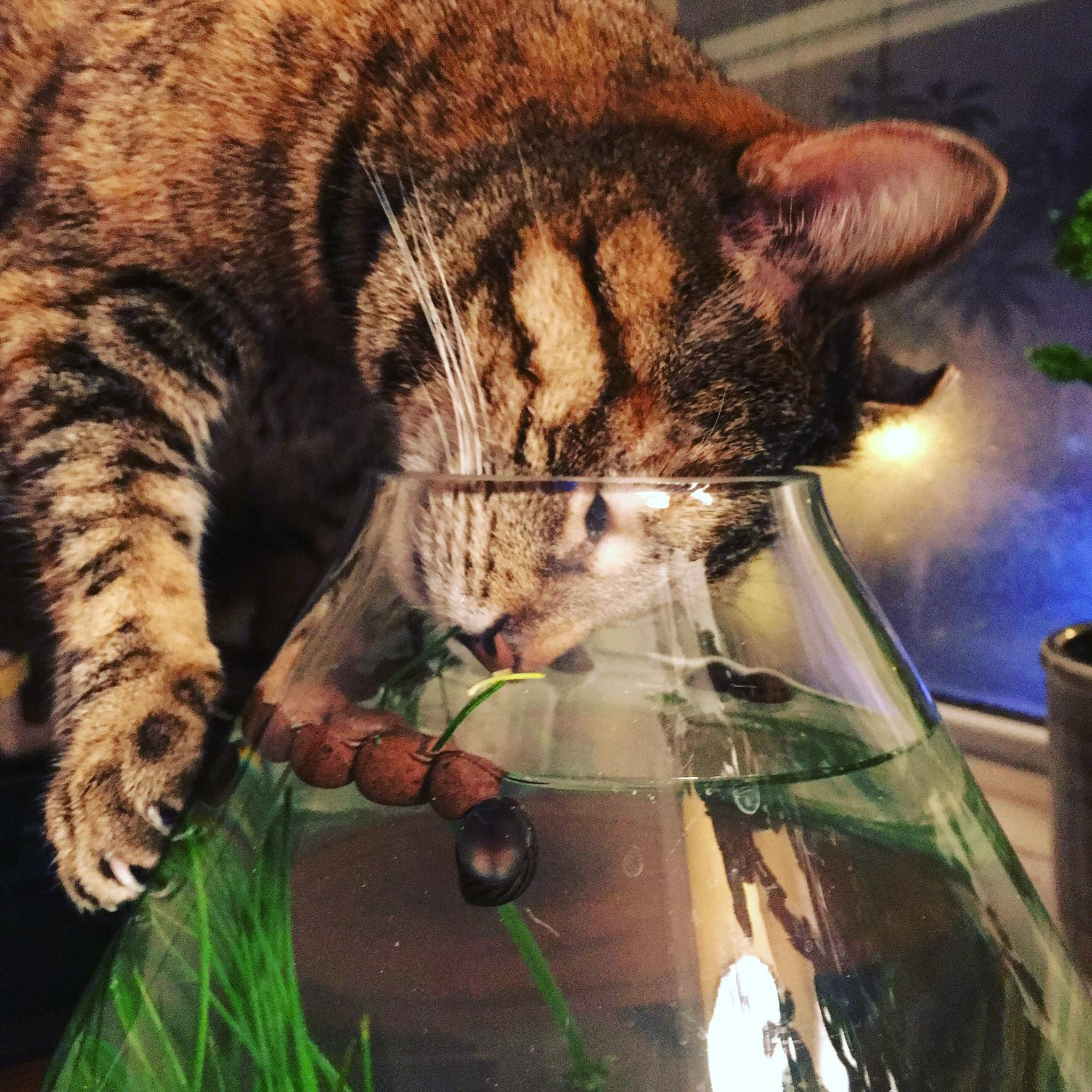 must touch tha fishy