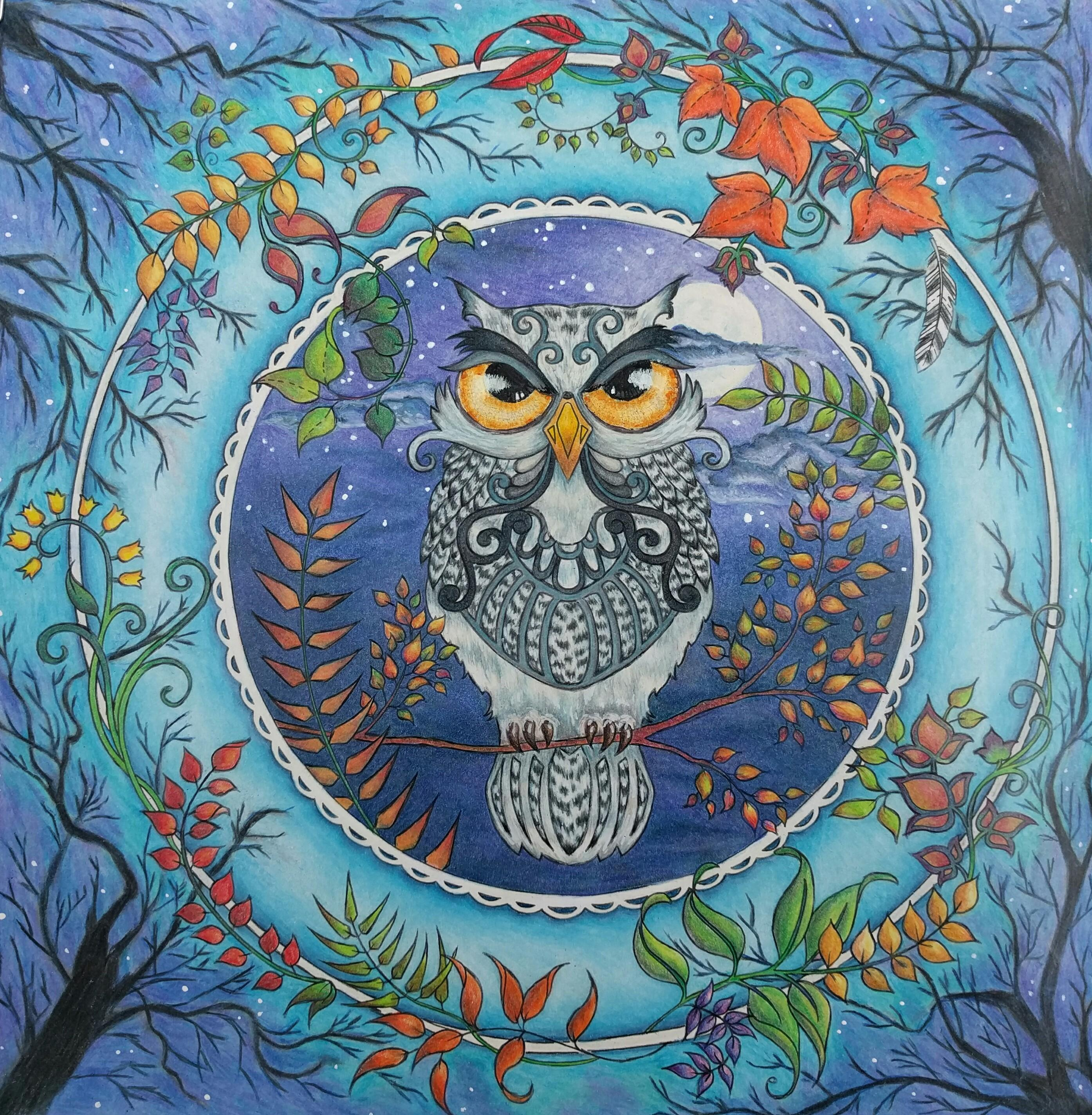 Owl Enchanted Forest Colored Pencil Amp Paint AdultColoring