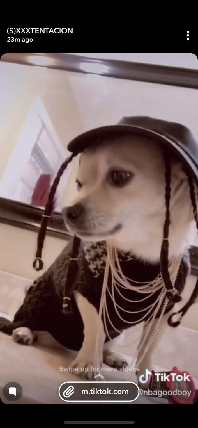 Dog With Fortnite Hat : fortnite, Fortnite, Travisscott