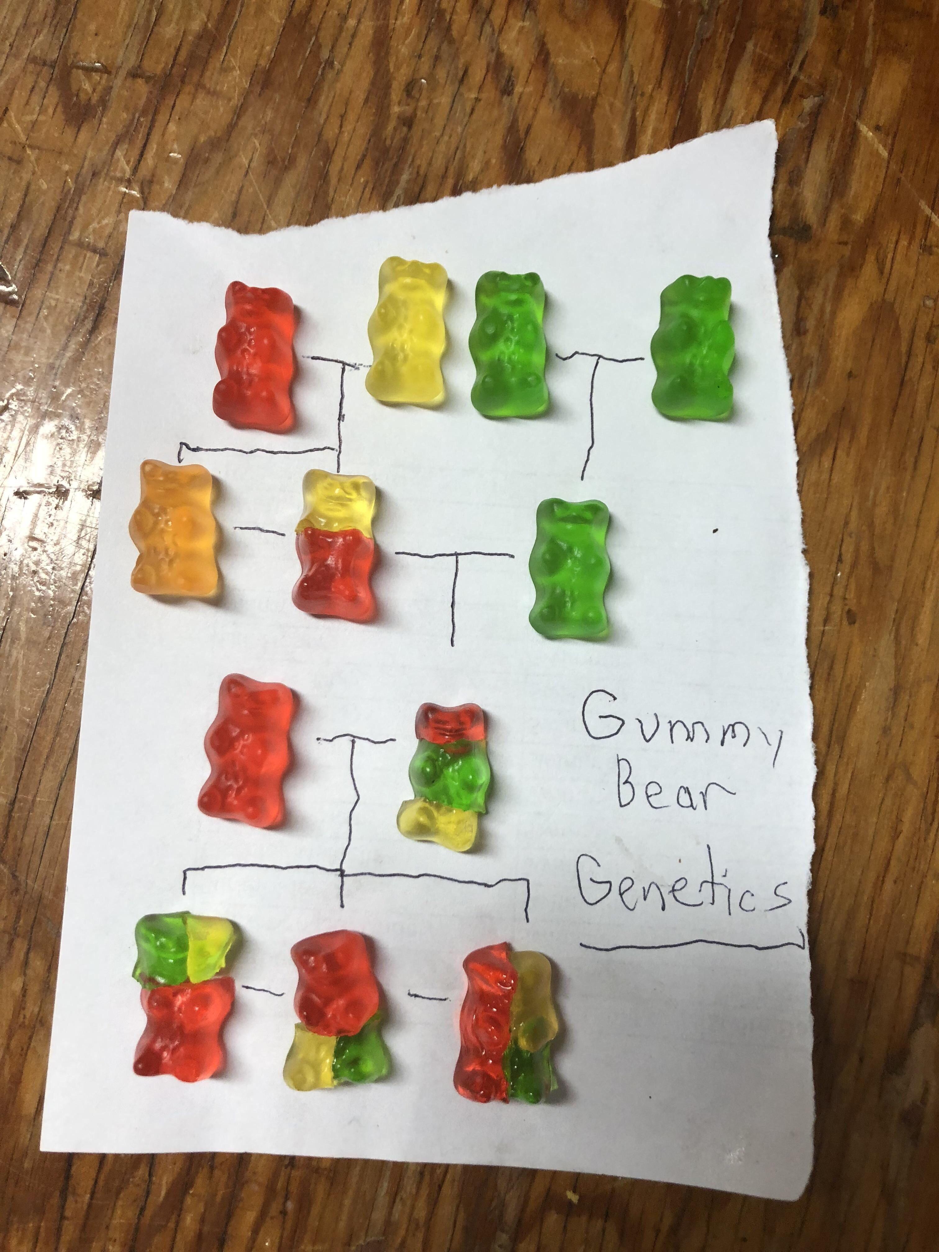 Gummy Bear Genetics Funny
