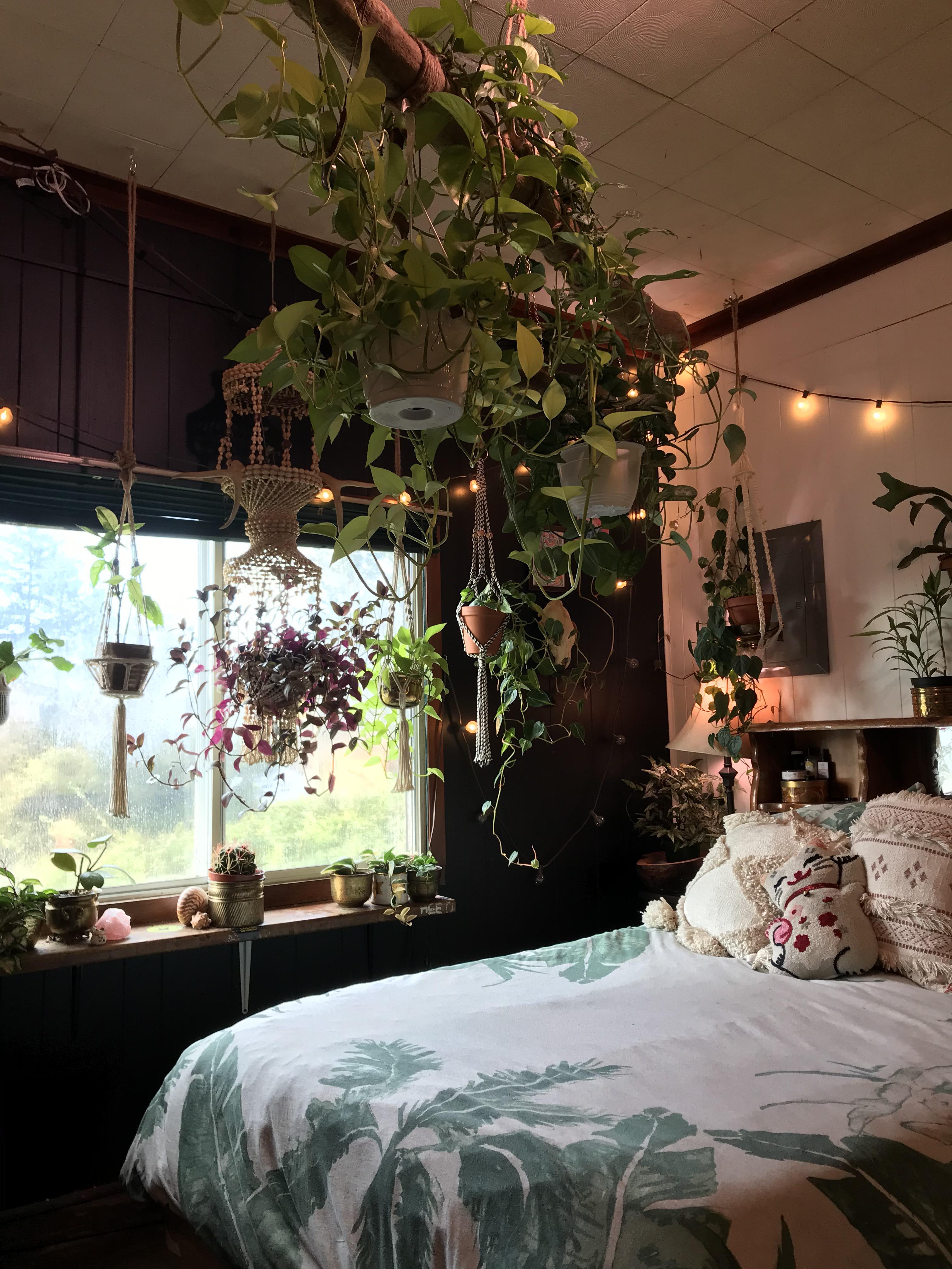 Bedroom Plant Canopy Houseplants