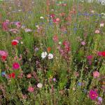 My Front Yard Wildflower Meadow Gardening