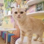 I Went To My First Cat Cafe In Seoul 10 10 Would Visit Again Cats