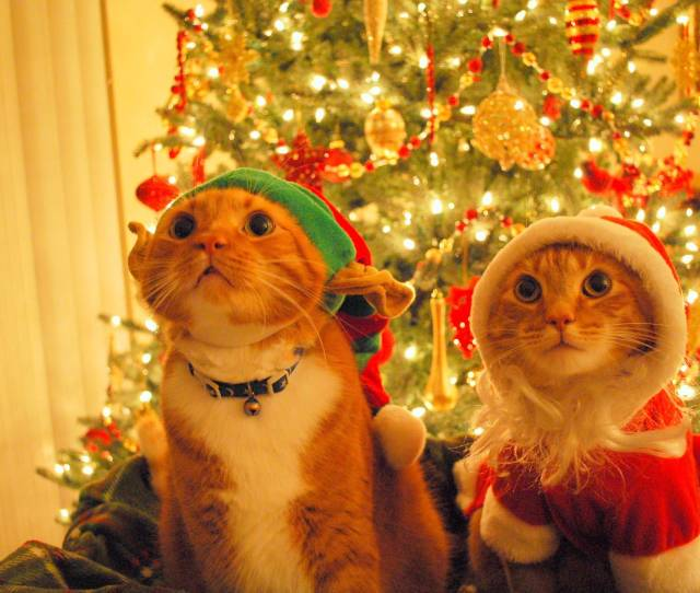 Cute Christmas Kittens Happy Holidays