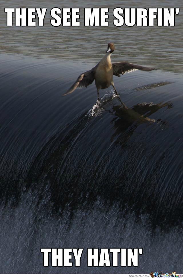 Surfin Bird Meaning : surfin, meaning, SURFIN, 😂😂😂, Okbuddyretard