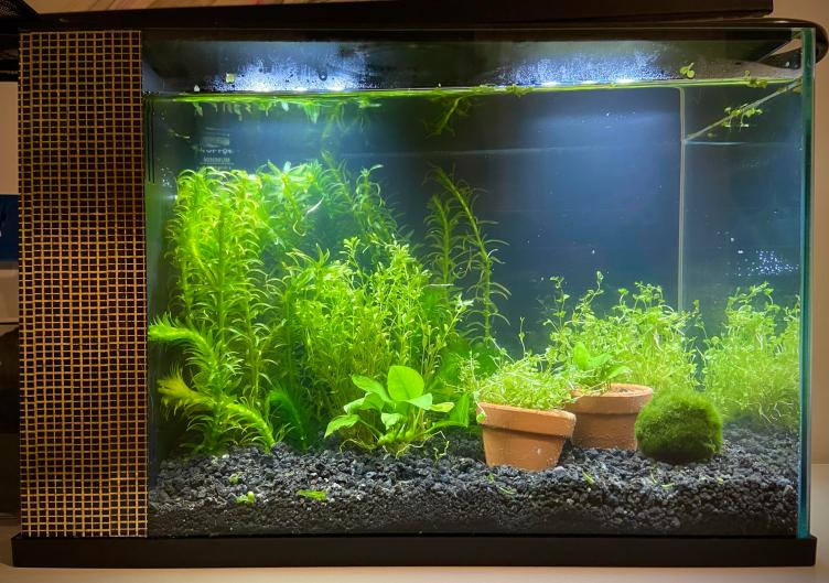 My first attempt at a planted tank! : PlantedTank