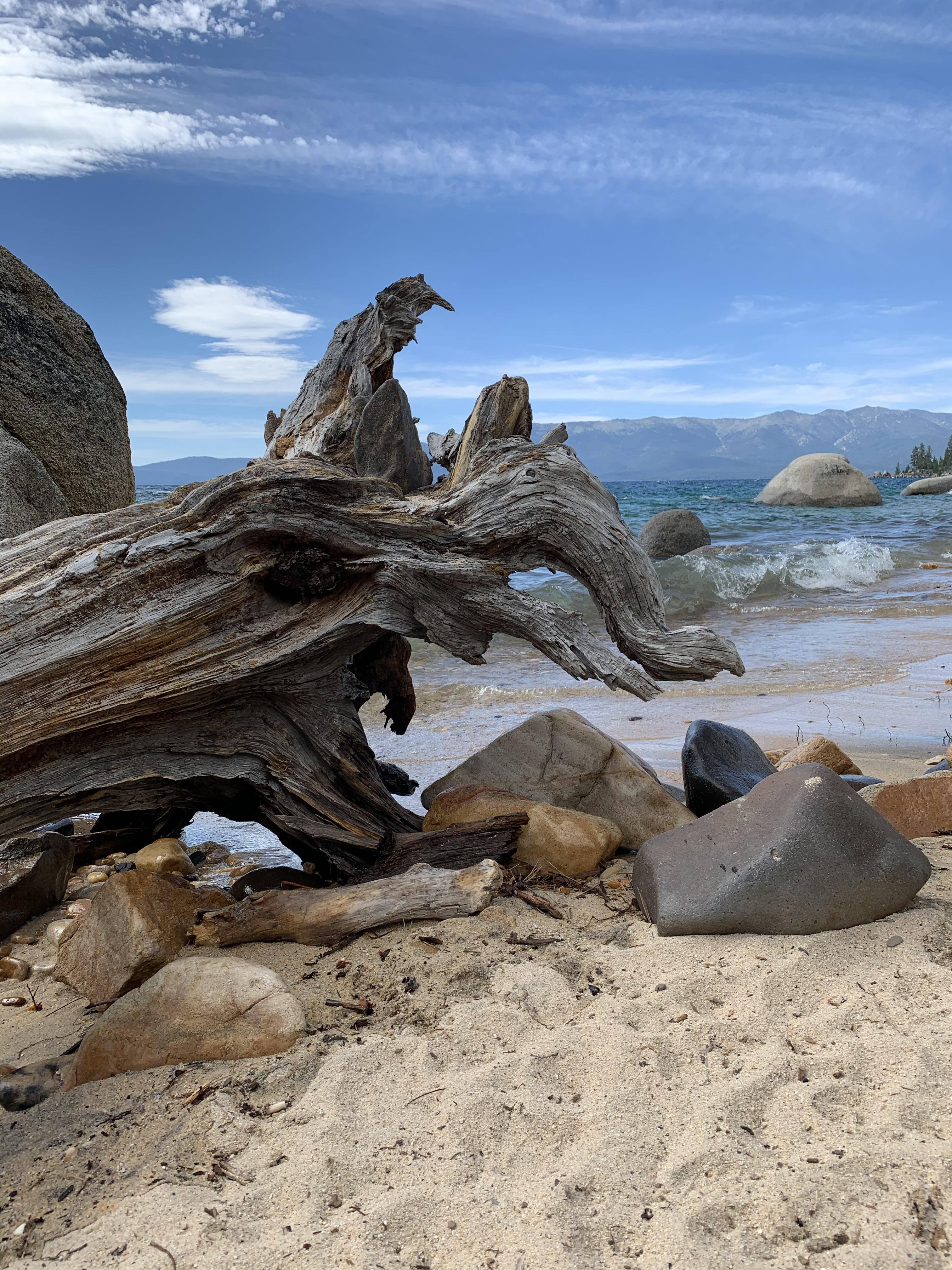Whale Beach Tahoe : whale, beach, tahoe, Stopped, Whales, Beach, Weekend!, Tahoe