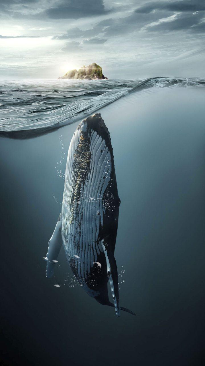 whales (1225×2000) credits: Jose Reis