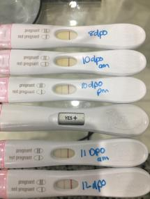 Progression 8 15 Dpo Wondfos And Frer Fmu - Year of Clean Water