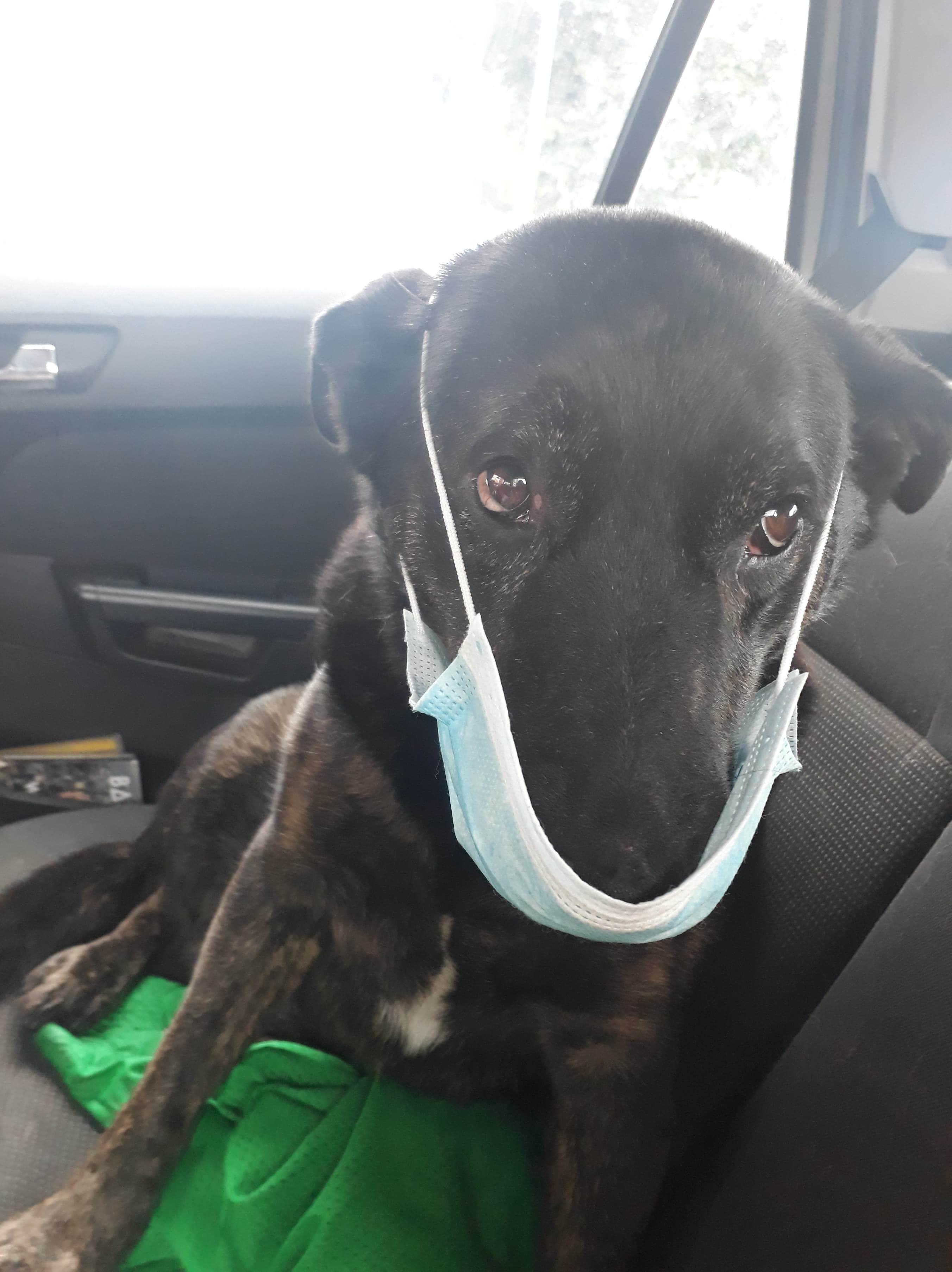 Not Impressed Dog : impressed, Impressed
