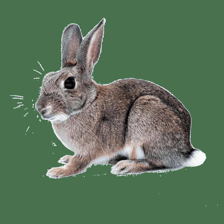 Rabbit Cutout
