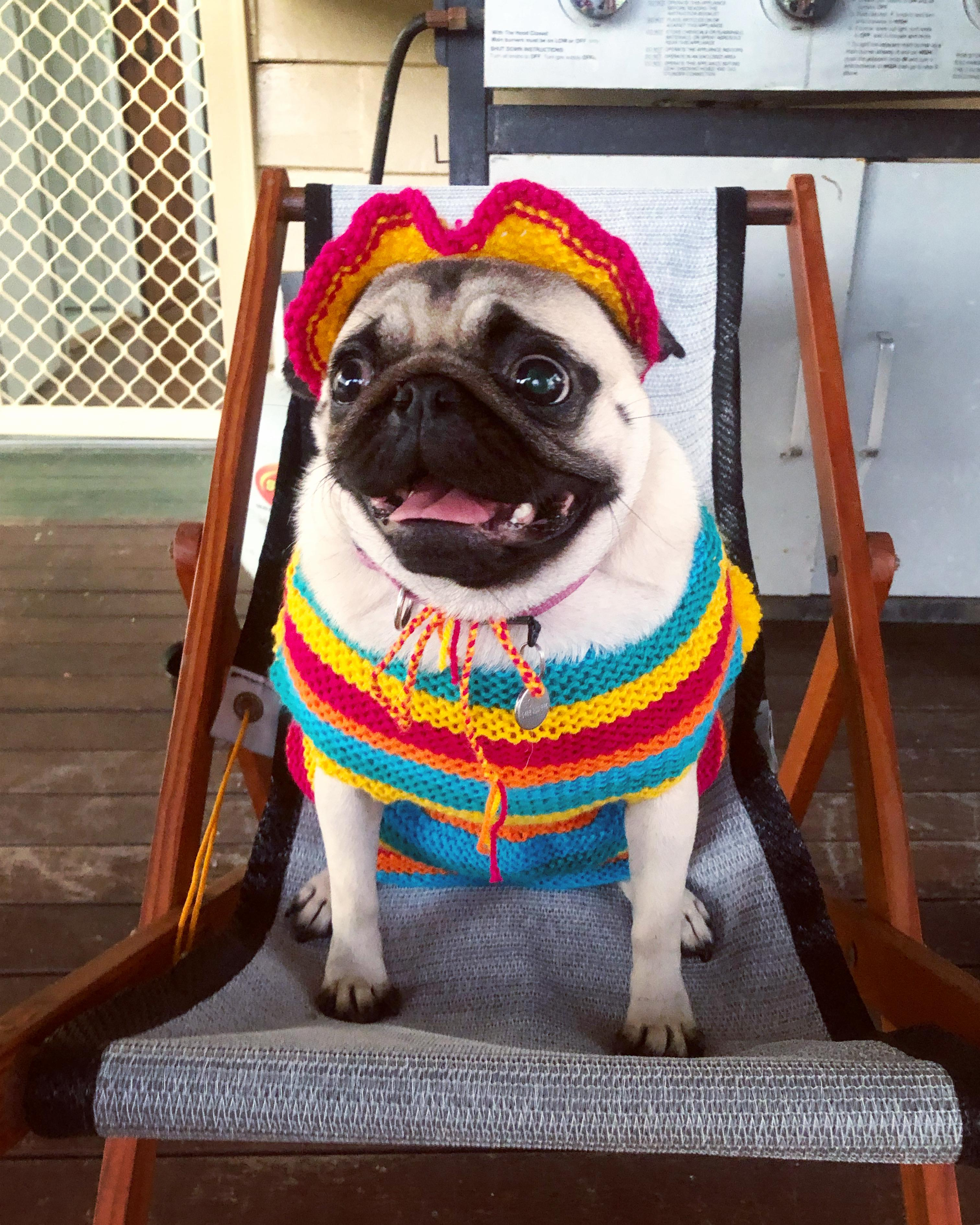 Sweater For Pug : sweater, Bored, Quarantine, Knitted, Rainbow, Sweater, Matching, Bonnet