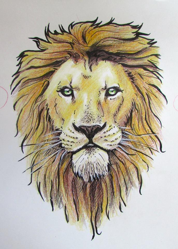 Lion Drawing Color : drawing, color, Lion