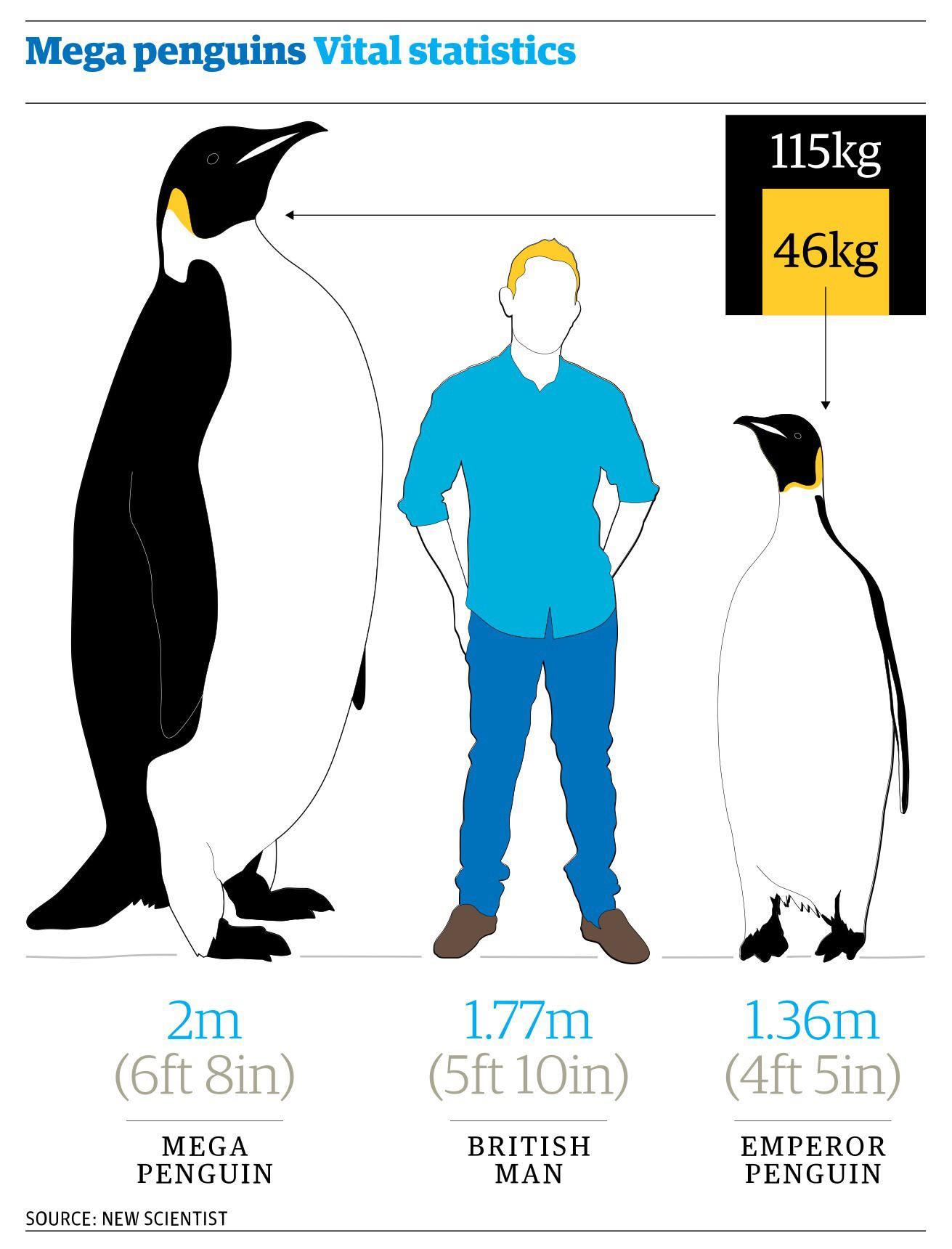 A Size Comparison Between A Man A Modern Day Emperor