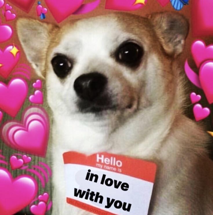wholesomedogmemes