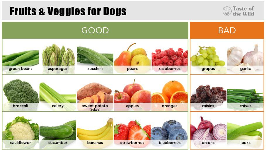 Fruits and Veggies Guide for Dogs : coolguides