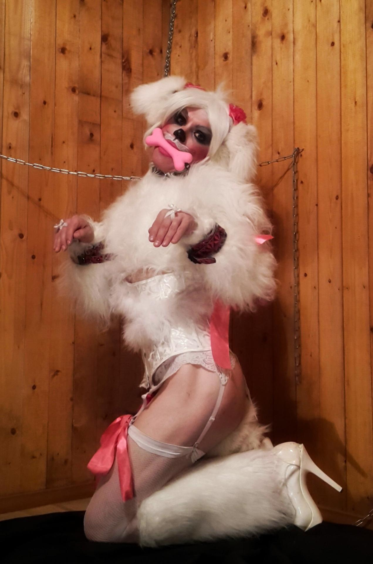 Sissy Pet Play : sissy, Once., Cant,, Sissy, Pup?
