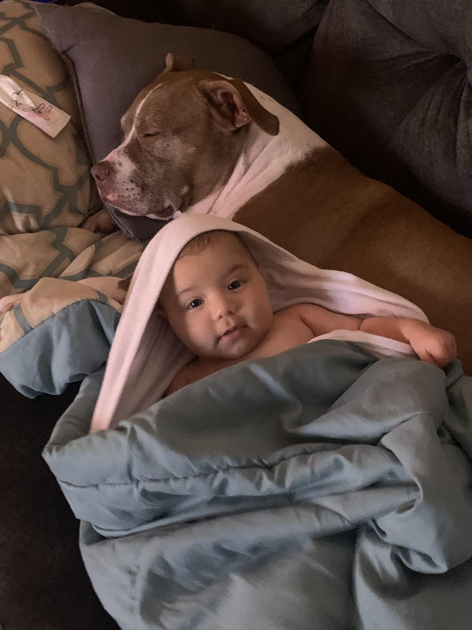 Newborn Baby Pitbulls : newborn, pitbulls, Pictures, Hate,, Trust, Pitbull, Newborn, Other, People, Pitbulls