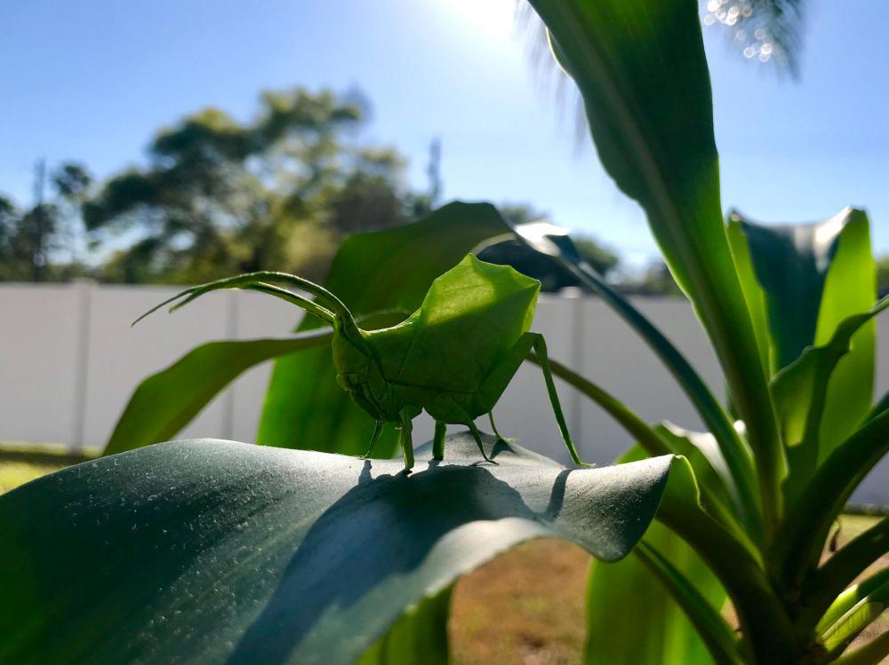 medium resolution of photoorigami leaf katydid