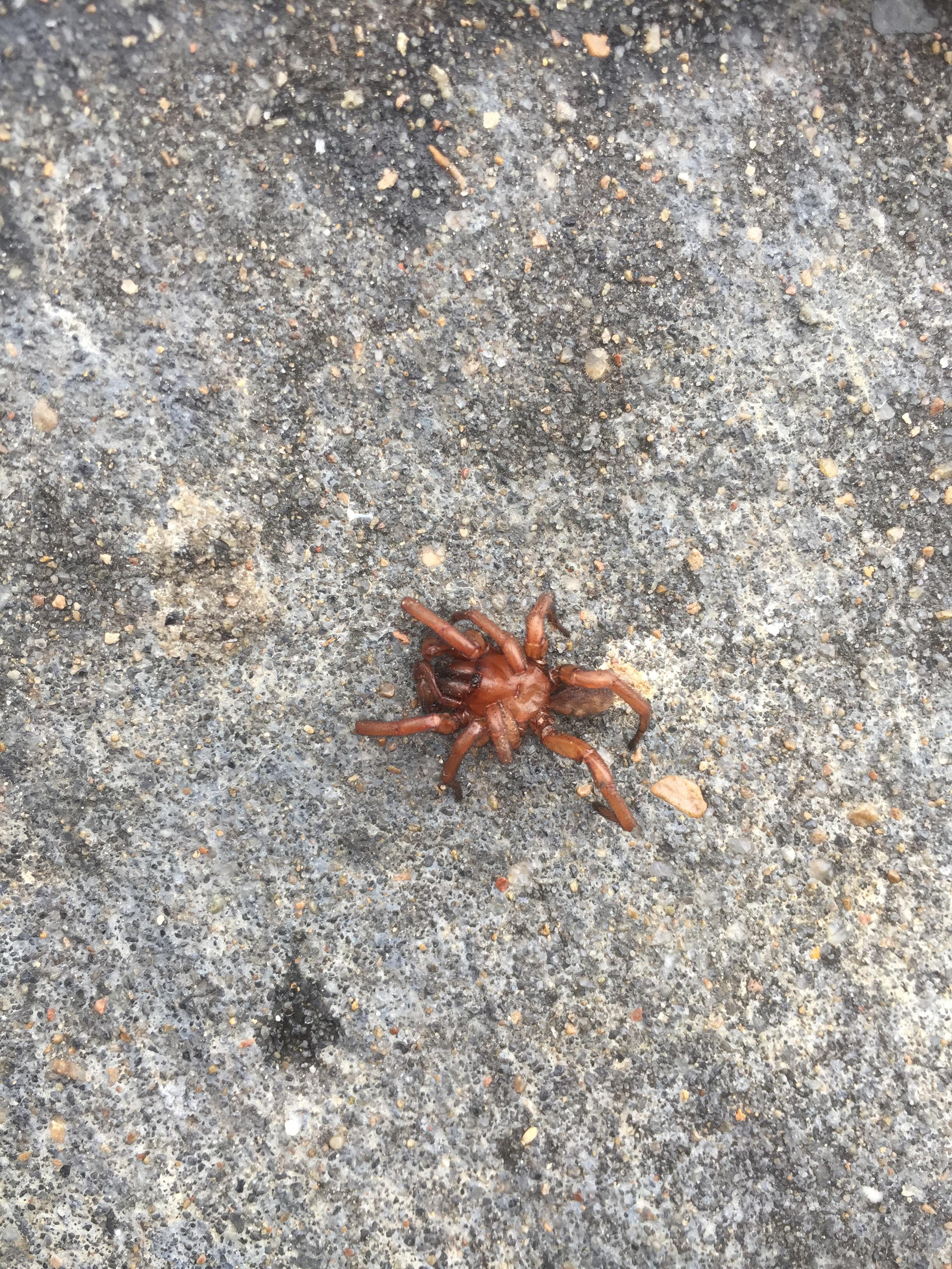 Found This Poor Little Spider Bro Outside Of Work This