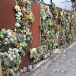 The Fencing Outside This Restaurant Is Also A Vertical Succulent Garden Mildlyinteresting
