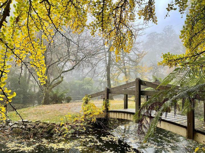 Alfred Nicholas Gardens, Sherbrooke Victoria Australia (Photo credit to Nicole Bates) [1080 x 810]