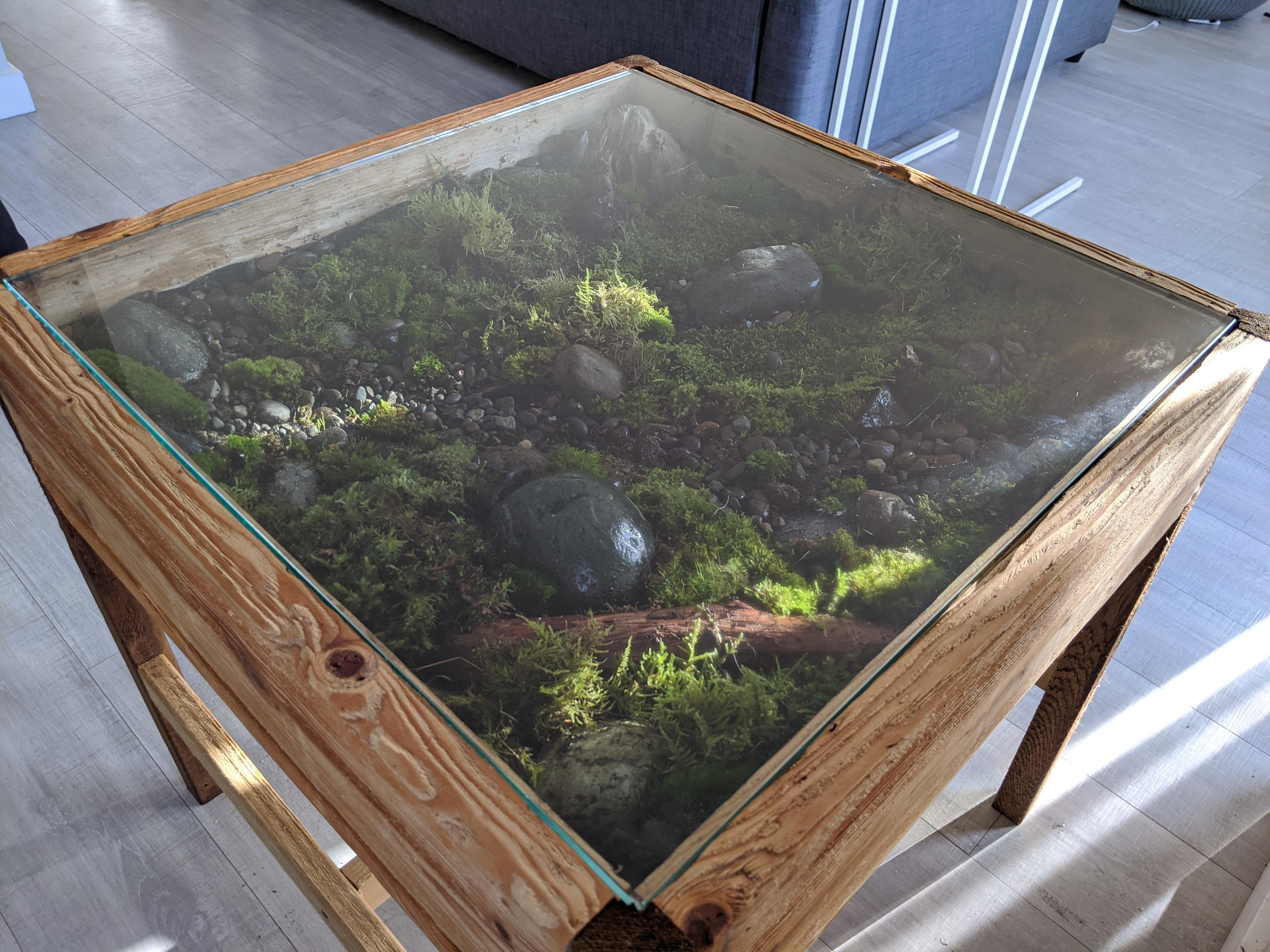 coffee table and put a moss garden