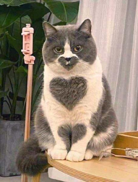 Blessed Cat Images : blessed, images, Blessed, Heart, Blessedimages