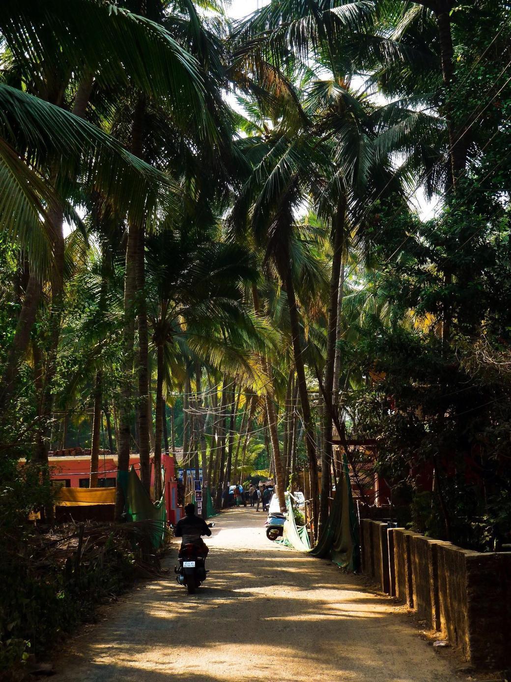 I took a morning walk near Agonda Beach, Goa, India : backpacking