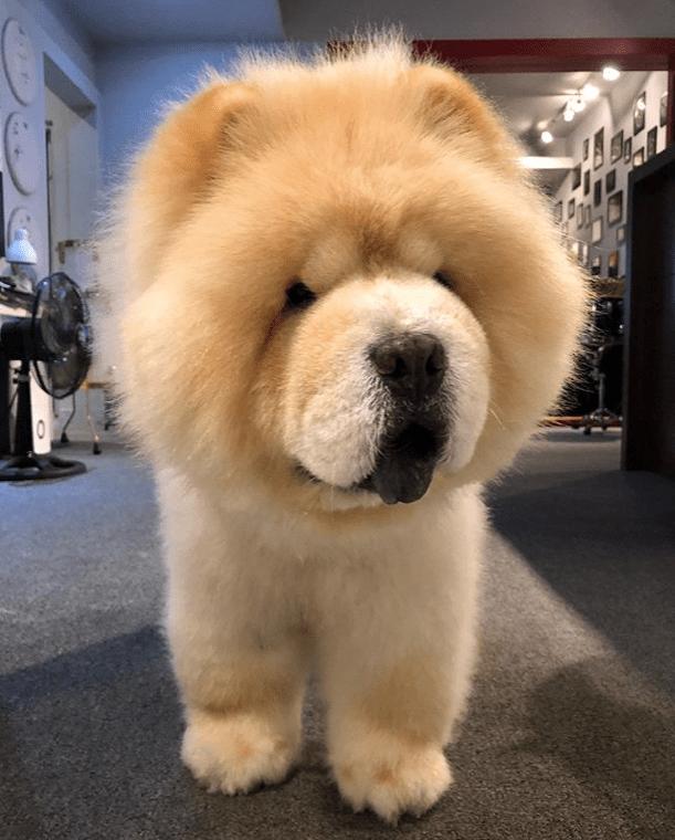Mini Chow : Fluff, Eyebleach