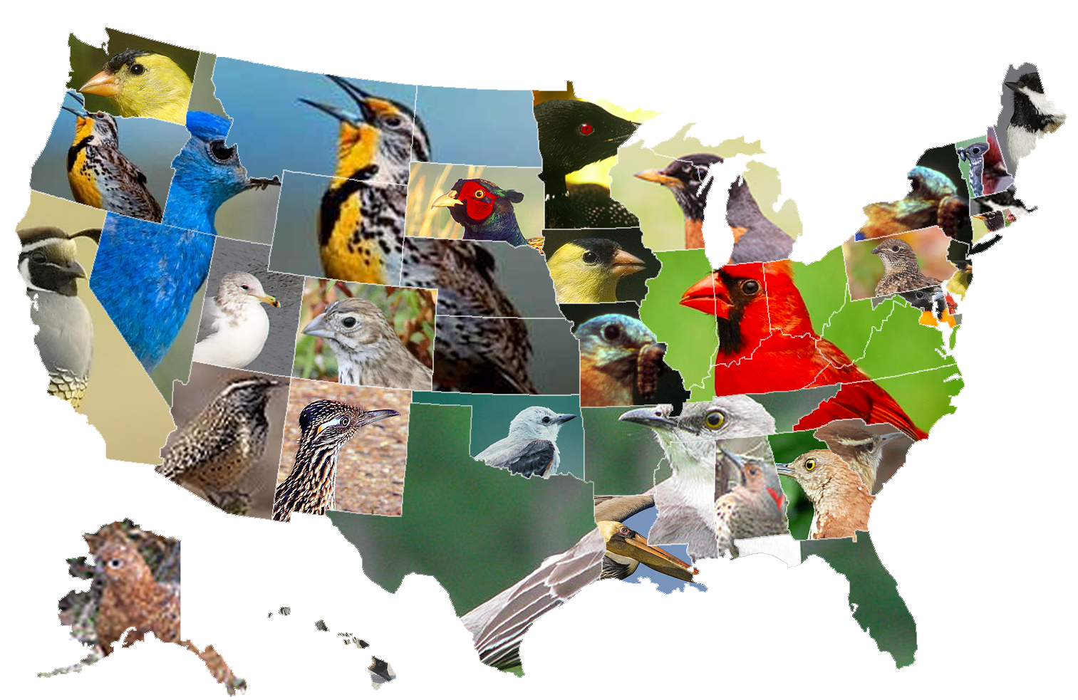Map Of State Birds Oc X983 Map