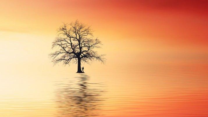 [1920×1080] Tree- Ocean- Sunset