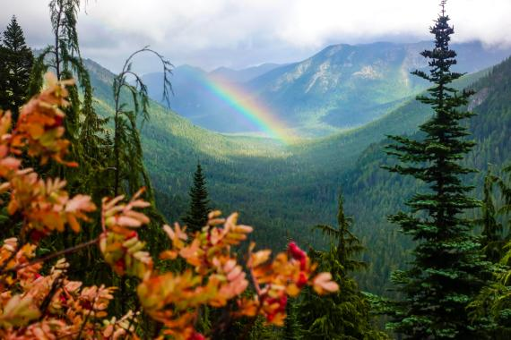 rainbow in Mount Rainier National Park