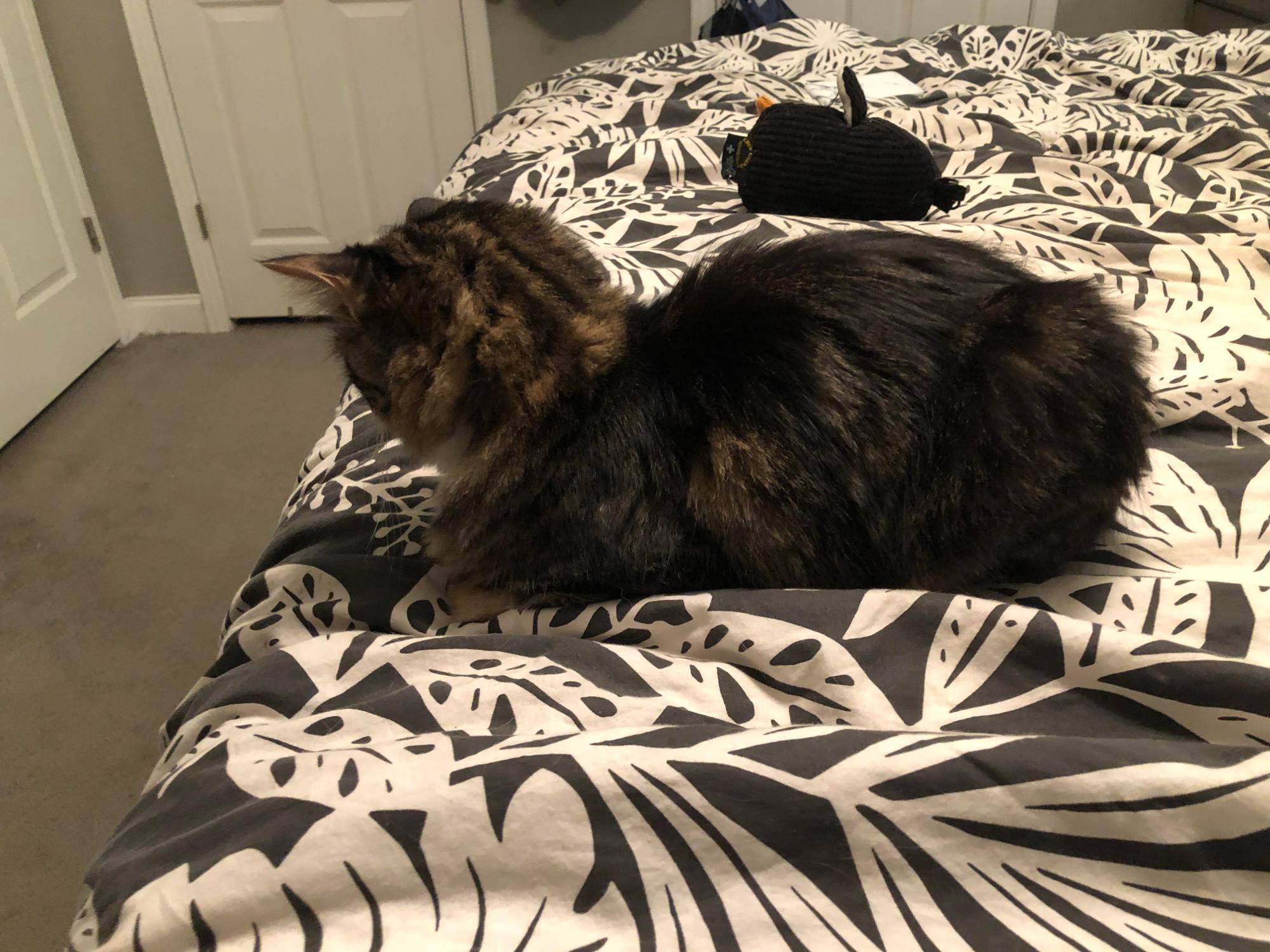 hight resolution of catloaf