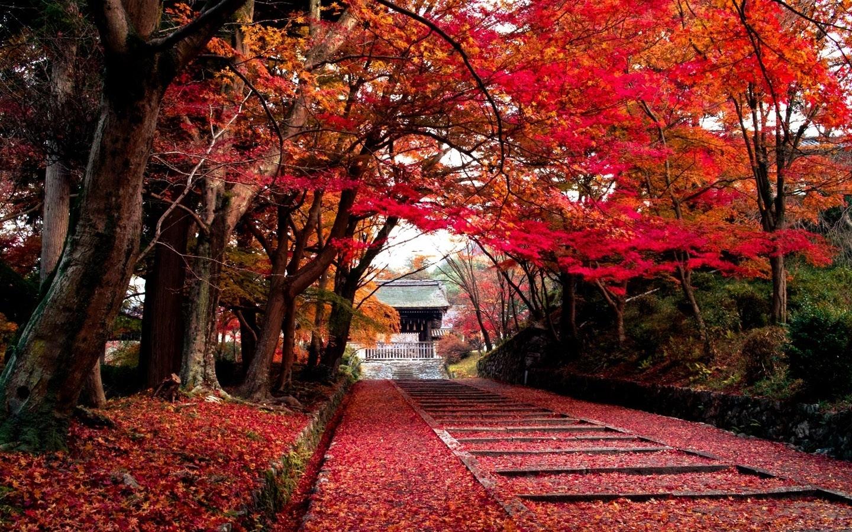 Fall Pixel Art Iphone Wallpaper A House Peaking Through Autumn Autumn