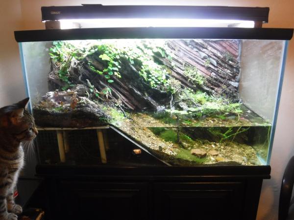 50 Gallon Paludarium Aquariums