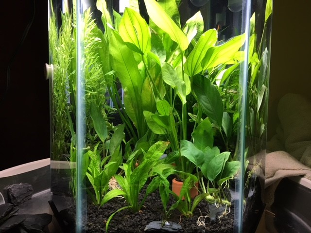 First planted tank. Too many plants? : PlantedTank