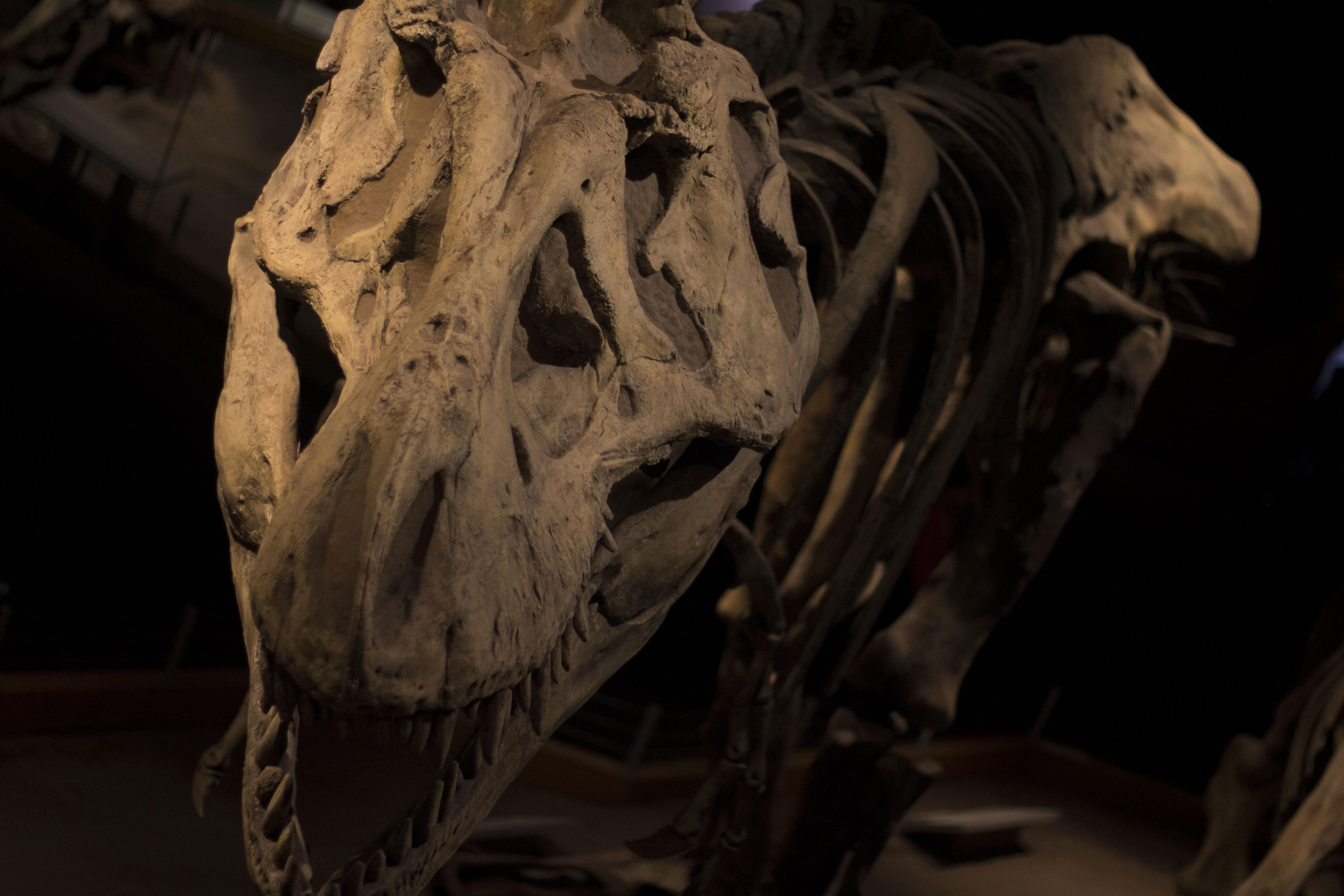 Took This Photo Of A T Rex At The Royal Tyrrell Museum In