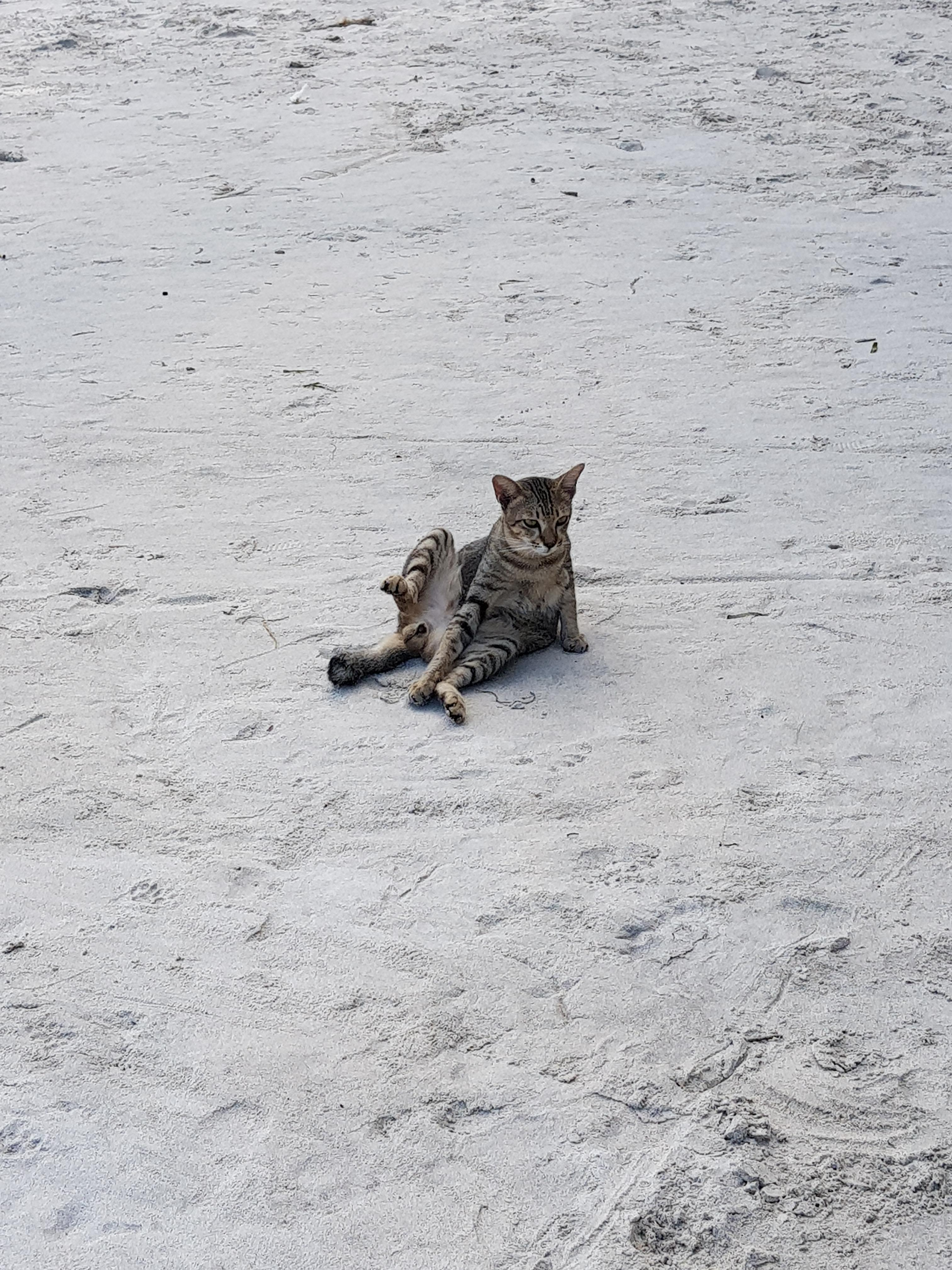This Cat At The Beach Today Cats