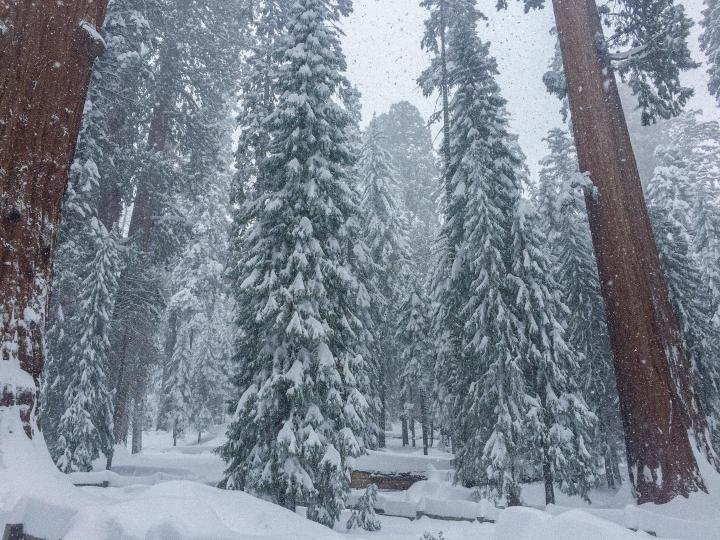Sequoia National Park (Photo credit to u/SmilinOstrich) [3624 x 2448]