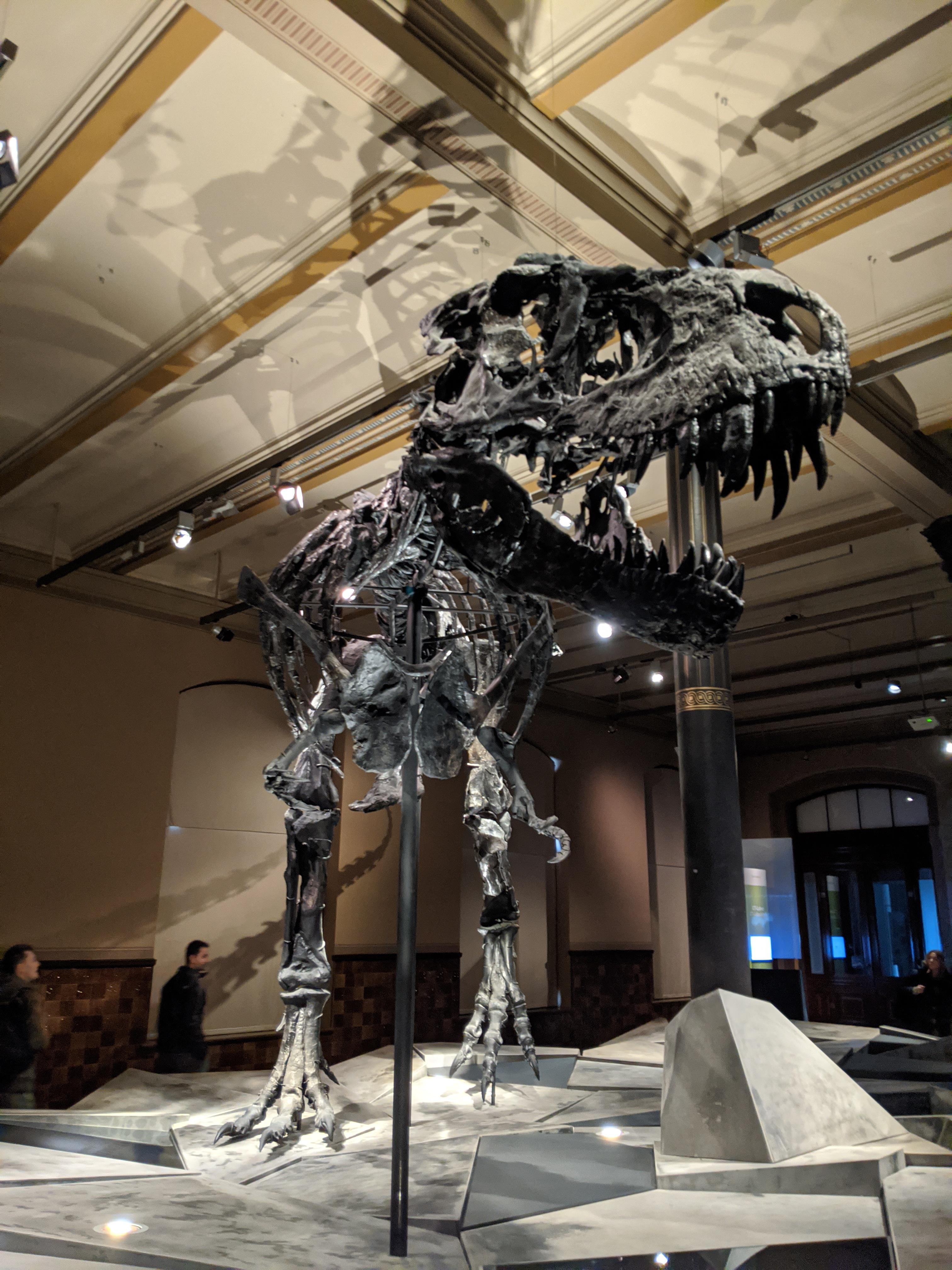 Tristan Otto The Black T Rex In The Naturkunde Museum In