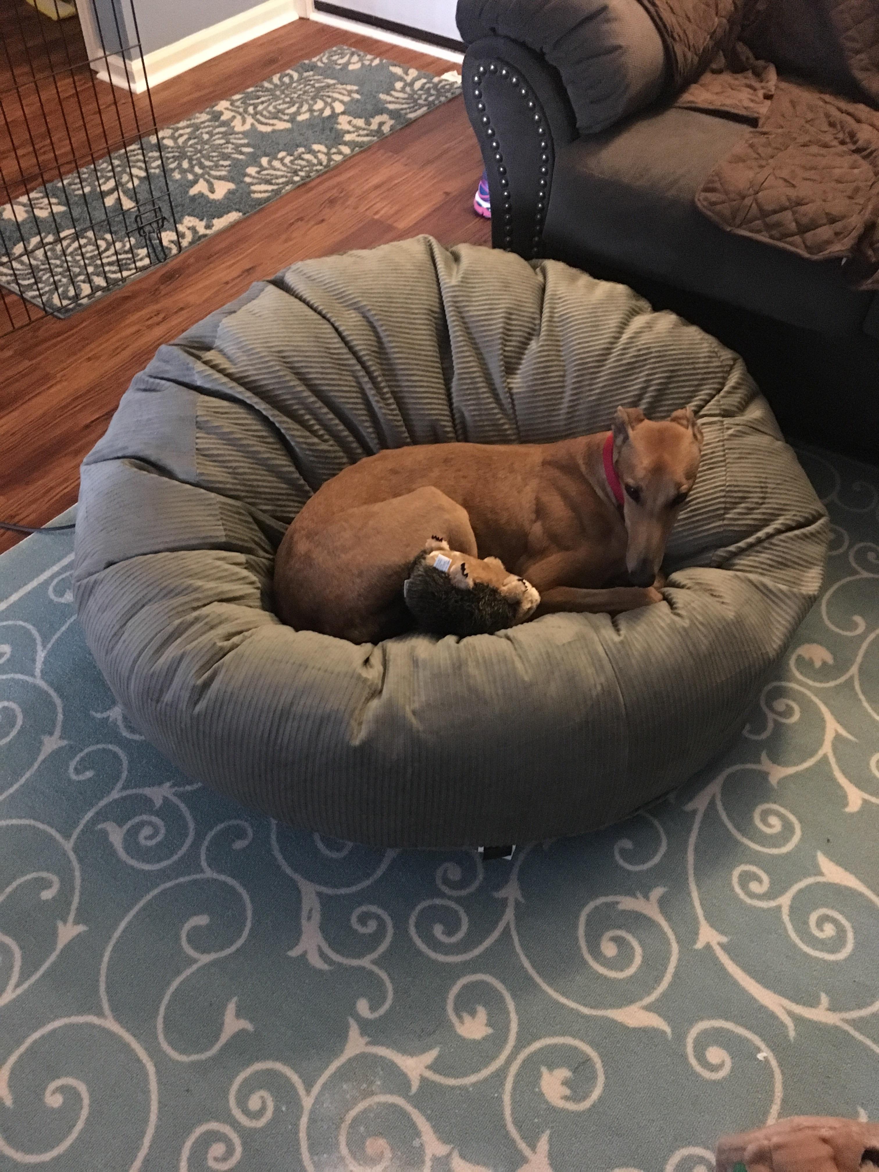 Amazon.com: slumber ball dog bed