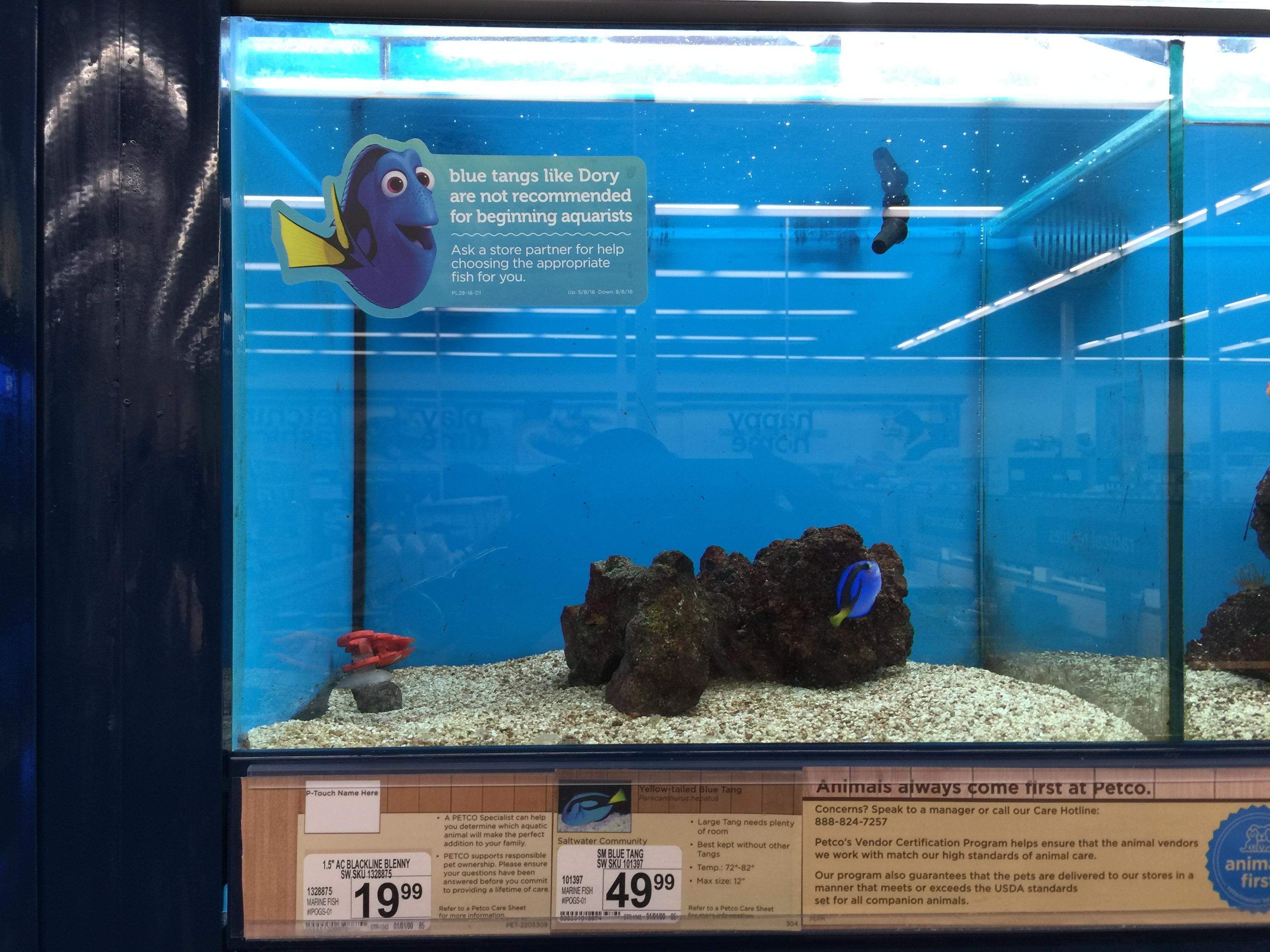 This pet store is using Finding Dory to NOT sell fish ...