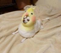 PsBattle: Dog in a chicken costume : photoshopbattles