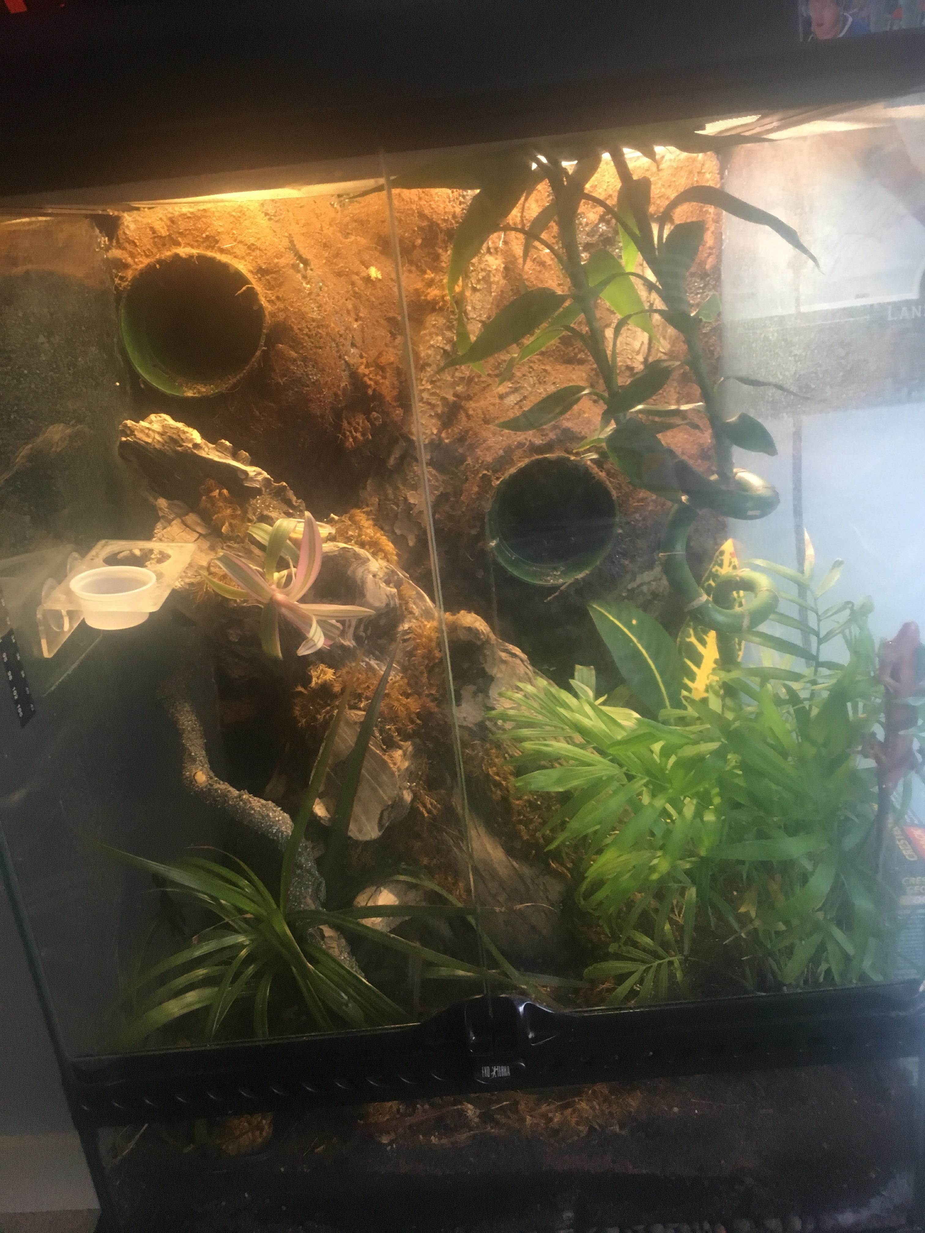 bought this crested gecko setup