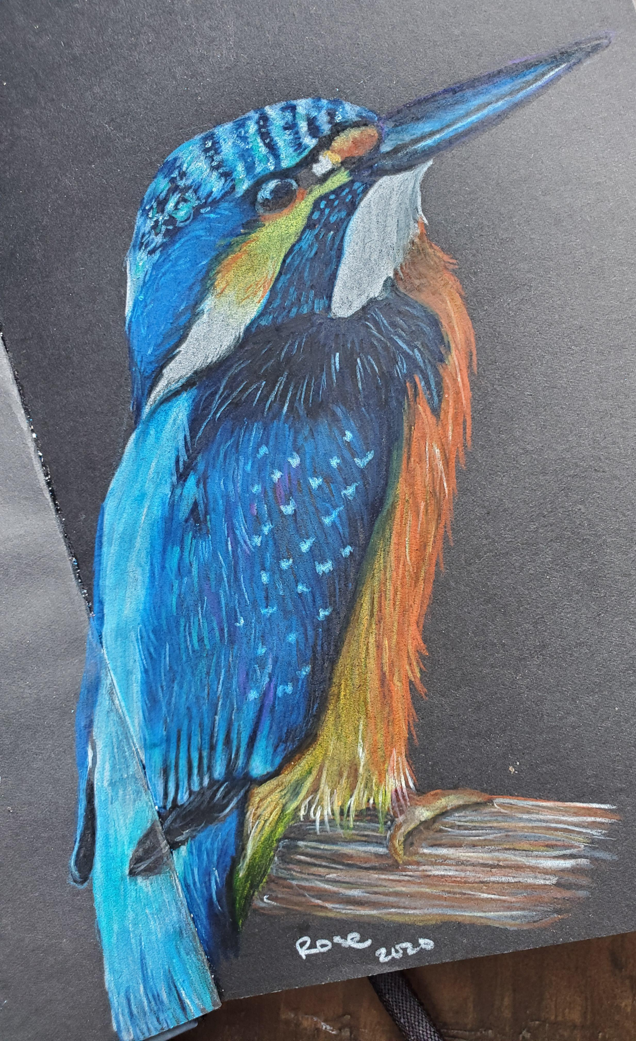 Things To Draw With Color : things, color, Favorite, Things, Birds., Colored, Pencil, Black, Paper., Birds?, Kingfisher, Wildart