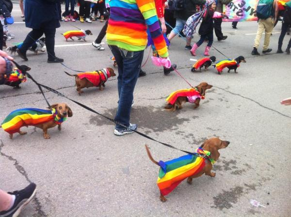 Dogs wearing rainbow capes marching at Pride